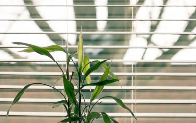 5 Tips For Cleaning Blinds (And Keeping Them Clean!)